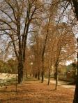 chestnut avenue KisDuna